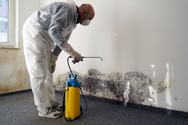 Man applying solution with spray nozzle on mold on wall - Where Does Mold Come From & How Dangerous Is It in Philadelphia
